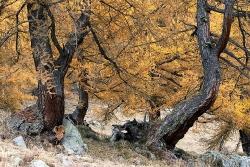 Lötschental im Herbst