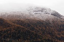Monatsbild November 2017