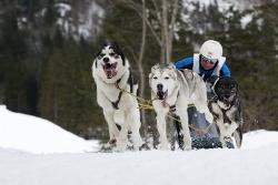 Schlittenhunde WM 2014 Kandersteg