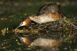 Wasservögel